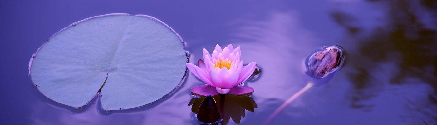 Lotus-floating-Services-The-Beauty-of-Now